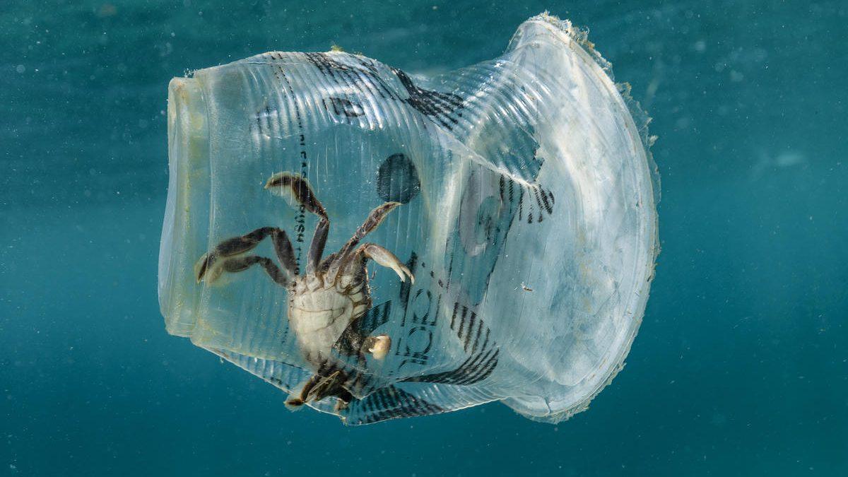 Crab struck in plastic